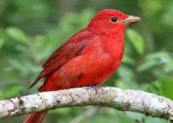 Protégé: Les PSB du Lycée Franco Costaricien mènent en famille un projet sur les oiseaux migrateurs